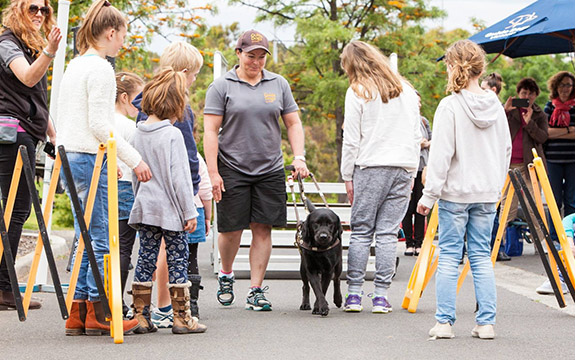 Beautiful guide dog being walked | Image source: Guide Dogs Victoria