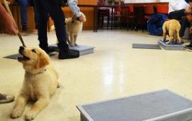 Guide dogs can help manage mental and physical health issues | Image: Guide Dogs Victoria