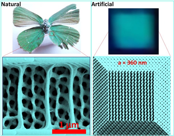 comparison of natural and artificial nanostructure