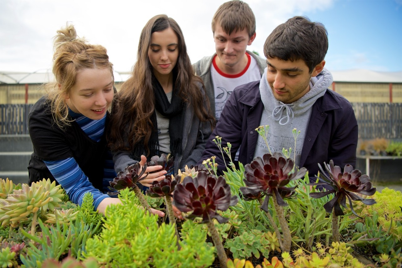 A group of Swinburne horticulture students peer over some succulents at the Wantirna campus.