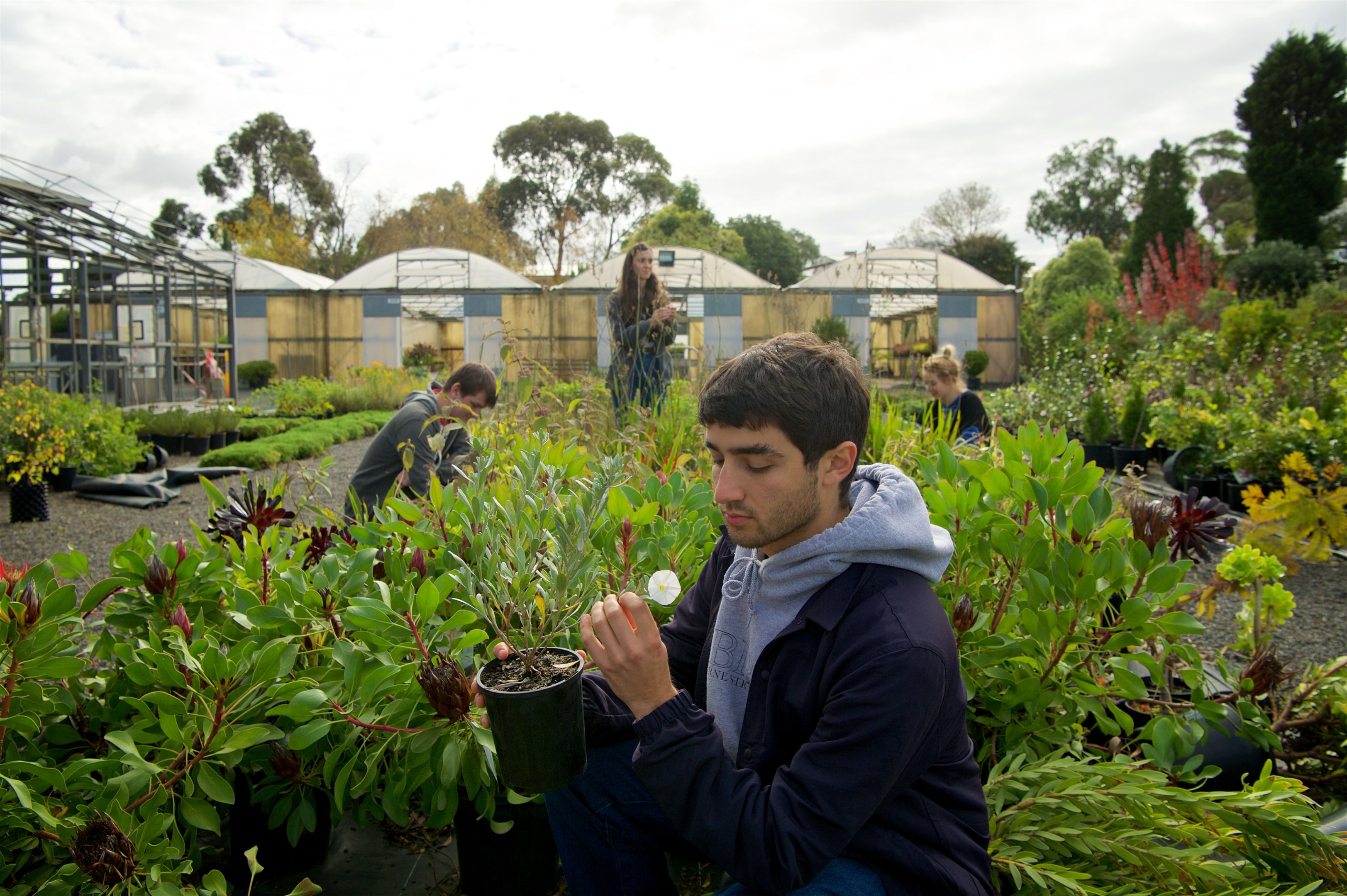 Young man holds a pot and examines a flower in a horticulture setting