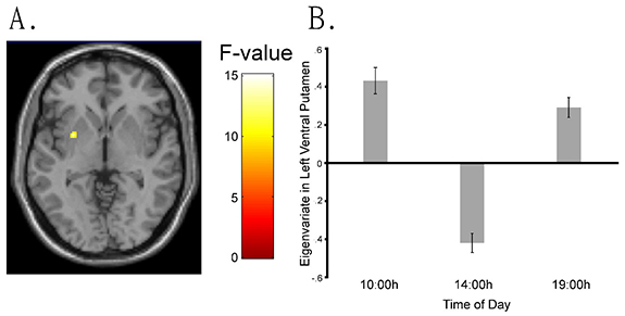figure showing brain reactions at different times of the day