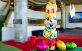 Photo of chocolate Easter bunny in a Swinburne indoor setting
