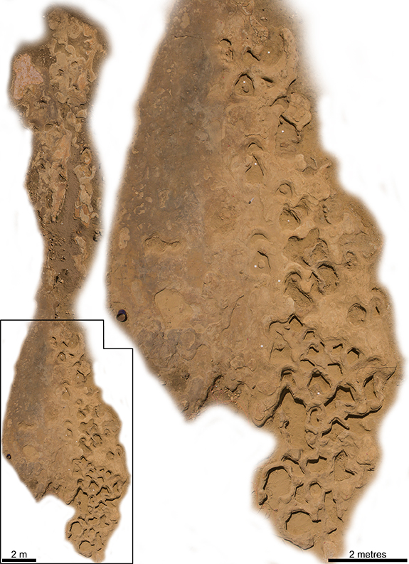 site map of dinosaur trackway discovered in central west queensland